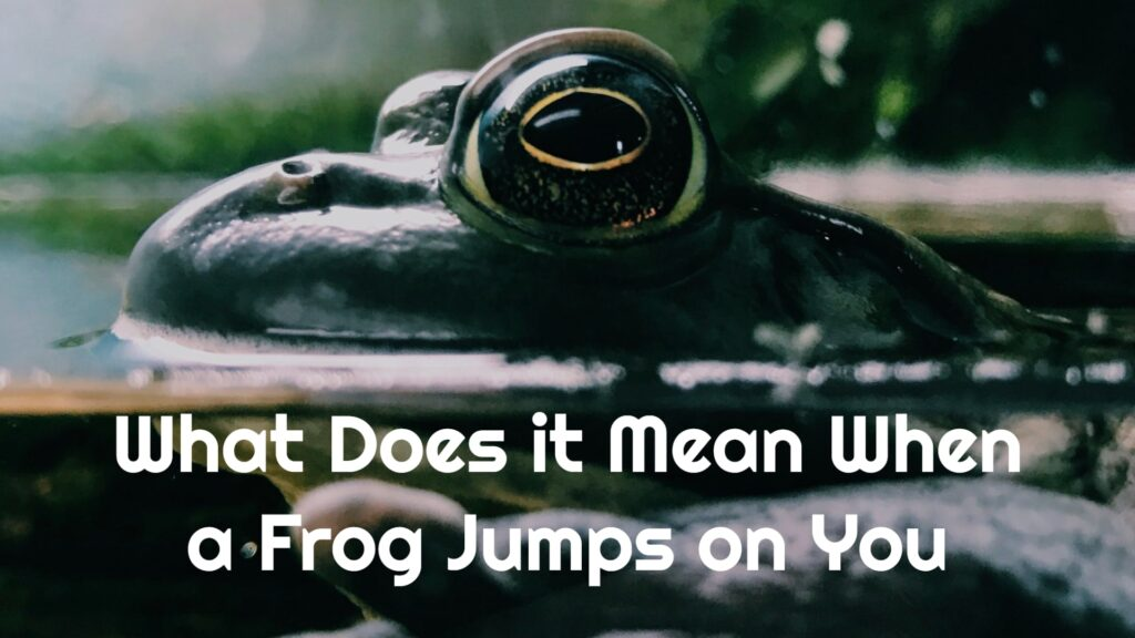 What Does it Mean When a Frog Jumps on You