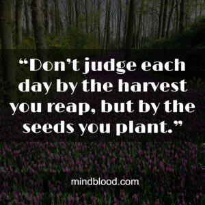 """""""Don't judge each day by the harvest you reap, but by the seeds you plant."""""""