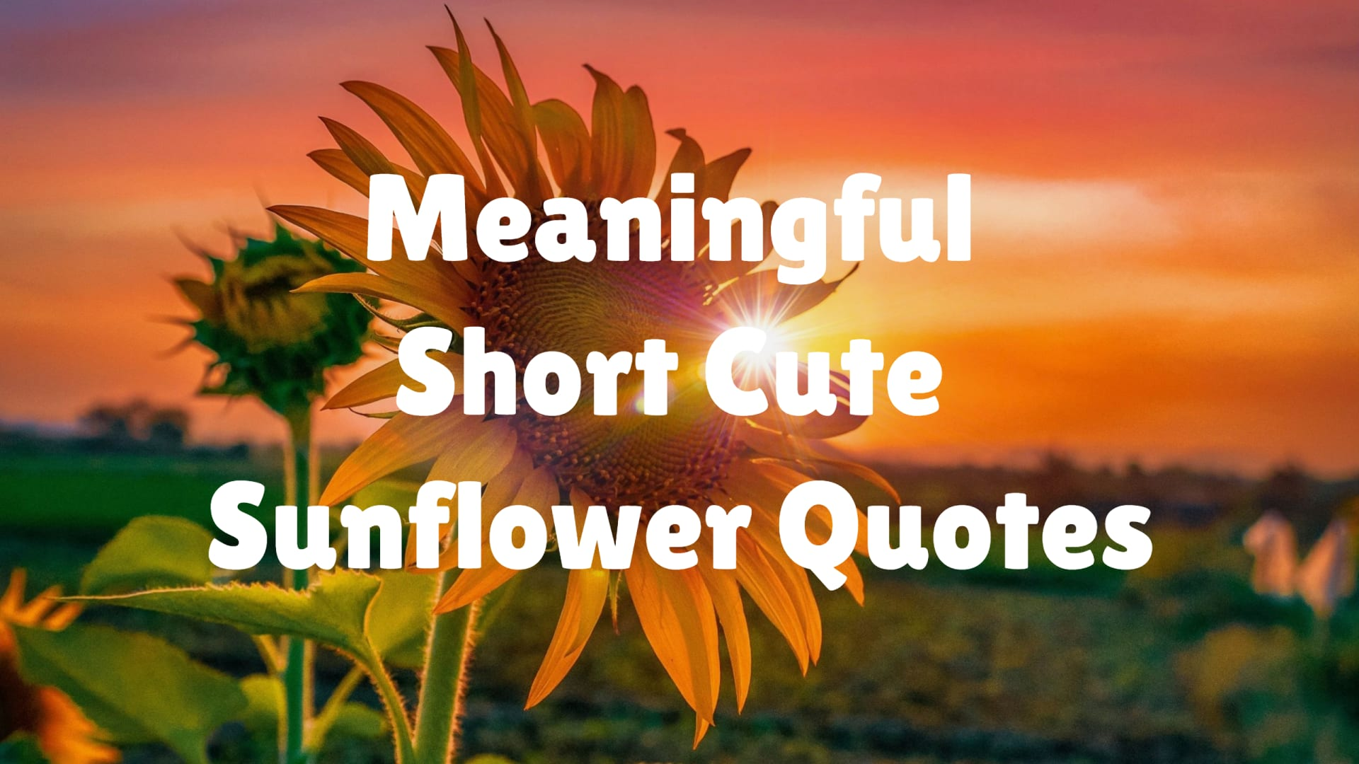 Meaningful Short Cute Sunflower Quotes